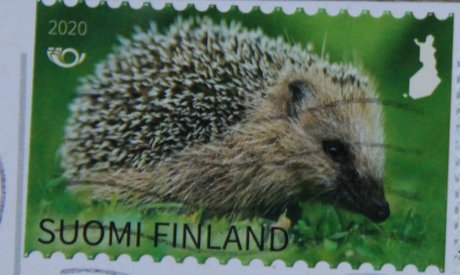 finnish postage stamp Hedgehog