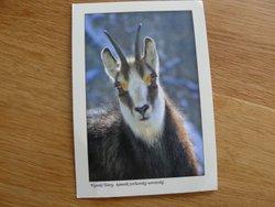 postcard chamois High Tatras Slovakia