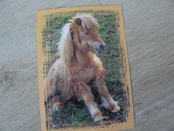 postcard little horse