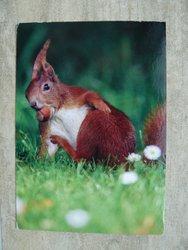 postcard of a squirrel
