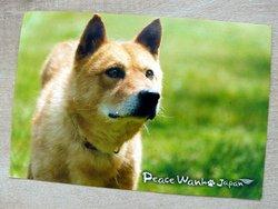 postcard dog peace wanko Japan