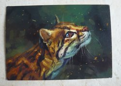 postcard cat drawing