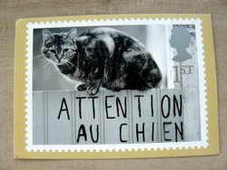 cat postcard UK