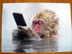 postcard monkey with smartphone